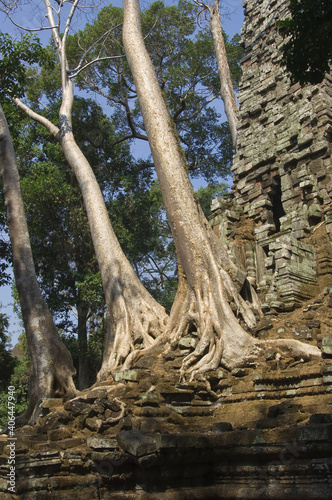 Obraz na plátně Ruins of the Preah Palilay temple invaded by the roots and trees, Angkor Thom, S