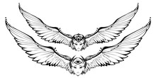 Black And White Bird, Woman Face, And Big Wings Tattoo. Sketch For Print T Shirt And Tatoo Art. Alchemy. Vector Logo, Ilsolated Illustration.