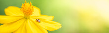 Nature View Of Little Ladybug On Yellow Flower With Green Nature Blurred Background In Garden With Copy Space Using As Background Insect, Natural Landscape, Ecology, Fresh Cover Page Concept.