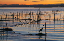 REFLECTIONS IN THE EVENING OVER THE LAKE OF LA ALBUFERA OF VALENCIA