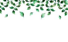 水彩の葉っぱのイラスト 上配置