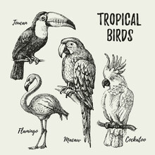 Hand Drawn Sketch Black And White Vintage Exotic Tropical Birds Set. Vector Illustration Isolated Object.