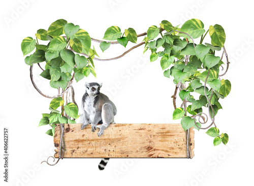 Fototapeta premium Ringtailed lemur, old wooden board, lianas and leaves of tropical plant