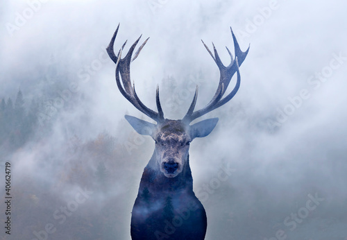 Red deer and the forest