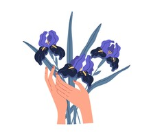 Female Hands Holding Elegant Bouquet Of Gorgeous Violet Irises Isolated On White Background. Beautiful Bunch Of Cut Spring Flowers. Colorful Flat Vector Illustration