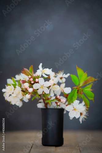 Fototapeta Tree blossoming branch with white flowers