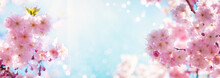 Dreamy Pink Cherry Blossoming Branches Against Blue Sky In Sunlight. Nature Spring Background From Pink Sakura Flowers With Bokeh Outdoors, Banner Format..