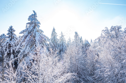 Obraz Zima śnieg las drzewa kaszuby wieżyca - fototapety do salonu