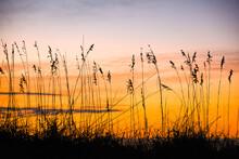 Sea Oats Silhouetted Against Sunrise Sky Garden City Beach, South Carolina, Coast