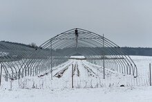 Metal Skeleton Framework Without Foil Of Greenhouse Tunnel For Cultivating Strawberries In Deep Snow During Winter