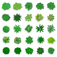 Trees Top View. Green Plants, Bushes, Shrubs And Trees For Landscape Or Architectural Design. Nature Green Spaces Vector Illustration Set. Different Flora Elements, Vegetation For Map Or Plan