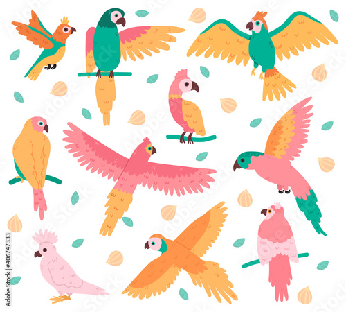 Fototapeta premium Tropical parrots. Jungle colorful birds, cute cockatoo, jaco and budgerigar. Summer tropical parrots vector illustration set. Beautiful wild flying and sitting creatures with feather