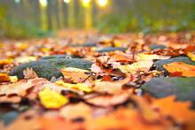 Herbstlaub Waldweg Farben Der Natur Entspannung Ruhe Relax Bäume Steine Im Herbst Steine Am Waldboden Laub Herbstlaub Farbige Blätter