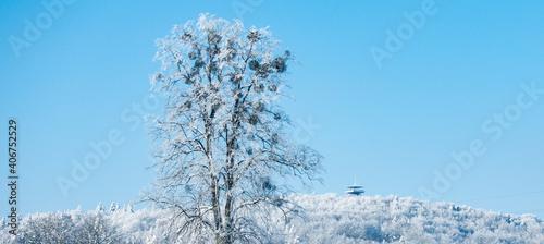 Fototapeta Kaszuby wieżyca zima śnieg drzewo góra obraz