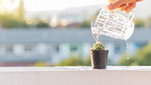 Watering Cactus In Black Pot With Glass Of Water. Blurred Background.