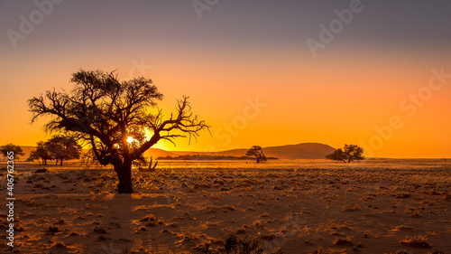 Stampa su Tela Grassy steppe with Camel Thorn trees (Vachellia erioloba), near Sesriem, evening light, Naukluft Mountains at the back, Sesriem, Namibia
