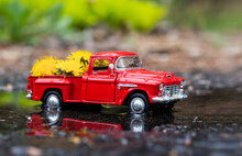 Concept Image Decorative Macro Toy Red Pick Up Truck With Box Full Of Yellow Dandelions. Shallow Depth Of Field With Rain And Reflective Ground.