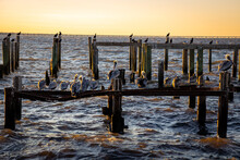 Pelicans On A Ruined Pier