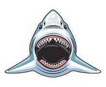 Shark Animal Wild Head Character Colorful Icon