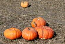Pumpkin Festival Half Moon Bay