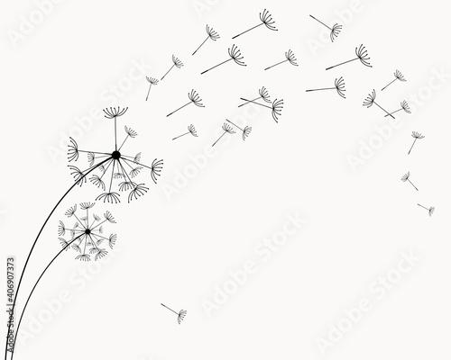 Valokuvatapetti Abstract black dandelion, flying seeds of dandelion