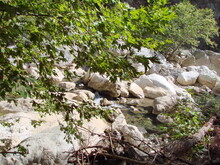 The Natural Beauty Of The Rapid Flow Of A Mountain River Between Large Stones On A Background Of Green Vegetation Illuminated By The Sun.