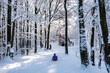 Zima śnieg ścieżka droga ludzie las drzewa kaszuby wieżyca