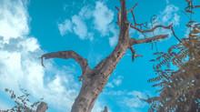 Tronco Seco Diante De Um Céu Azulado