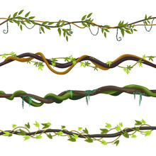 Set Of Isolated Jungle Vines Or Twisted Liana Plant. Foliage Of Exotic Tropical Forest Greenery. Park Flora. Tropic Garden Tree For Wall. Greenery Card Border. Background For Nature Or Natural Theme