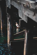 Lonely Duck Under The Bridge