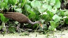 Amazing Wild Birds