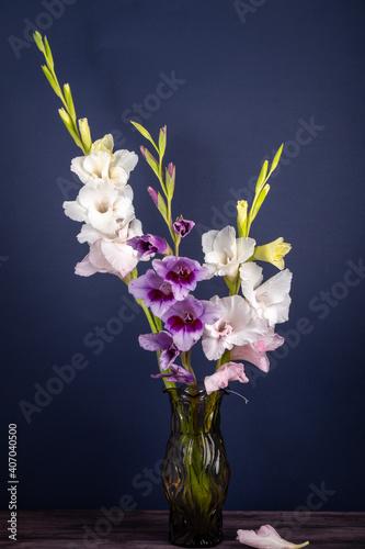 bouquet of gladioli in a vase on a dark blue background Fototapet
