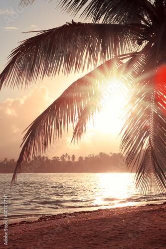 Obraz Tropical sunrise with coconut palm trees and caribbean sea . - fototapety do salonu