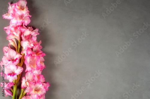 Tablou Canvas gladioli pink gray countertop