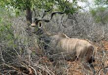 Les Animaux Du Parc National Kruger, Afrique Du Sud