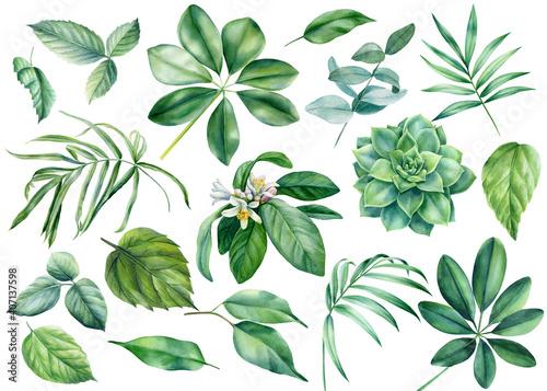Fotografija Flora design elements