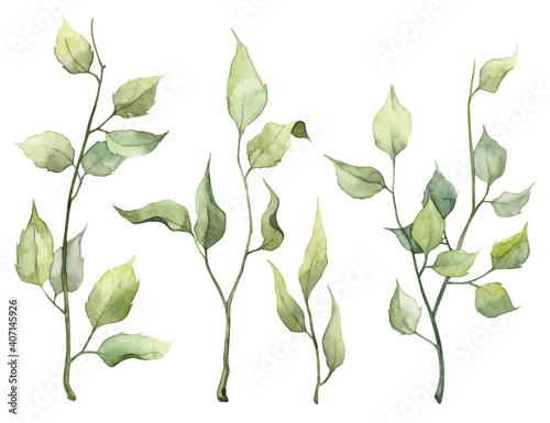 Fototapety, obrazy: Collection of hand painted watercolor green leaves
