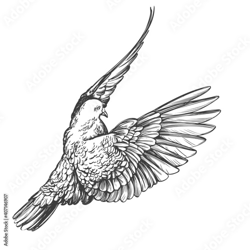 Fotografia dove bird is a symbol of peace and purity hand drawn vector illustration realist