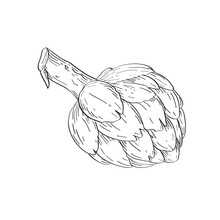 Globe Artichoke Or French Artichoke And Green Artichoke Line Art Drawing Black And White