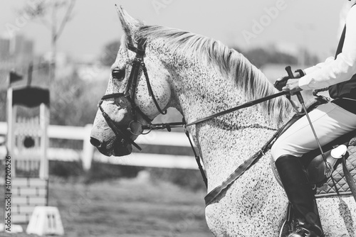 rider on a white horse in a contest. black and white Fototapet