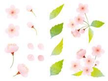 水彩風 いろんな桜と葉桜の素材イラスト
