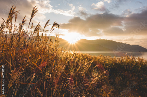 すすきの間から見える太陽の光 Fototapeta