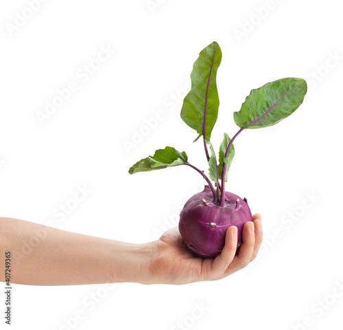 Fotografie, Obraz purple kohlrabi in hand path isolated on white