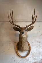 Taxidermy Animal Of Deer Head With Classic Frame Interior On The Old Rotten Brick Wall Building Decoration. Concept Vintage.