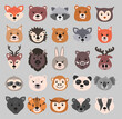 Beautiful set of child style woodland and exotic animals vector collection