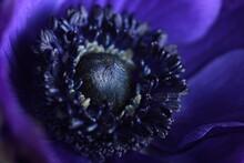 Macro Of A Blue Flower