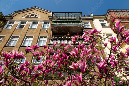 Fototapeta magnolia obraz