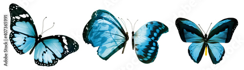 Fototapeta Color natural and watercolor butterflies , isolated on white background