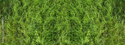 Fototapeta Natural green grass with tree and skye view sport background texture concept