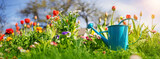 Fototapeta Tulipany - Beautiful flower seedlings growing in the soil at the garden